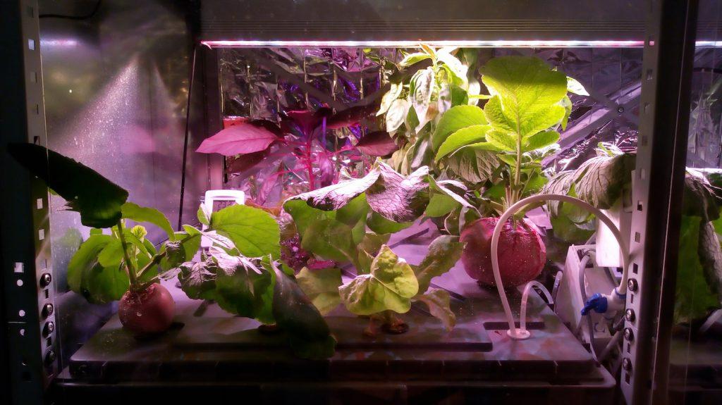 Hydroponik-Anlage für Urban Farming